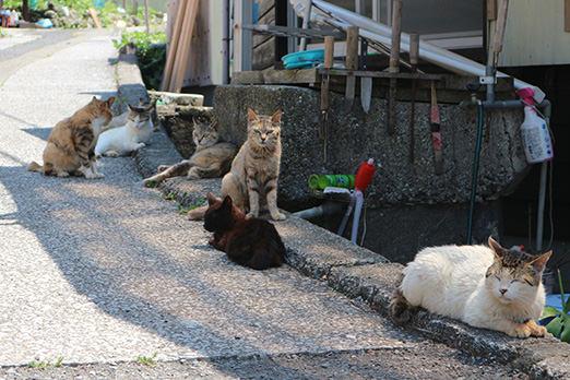 猫島として話題の深島の猫たち