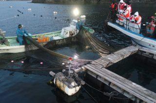 定置網漁収穫付き豪華朝食ツアーの写真